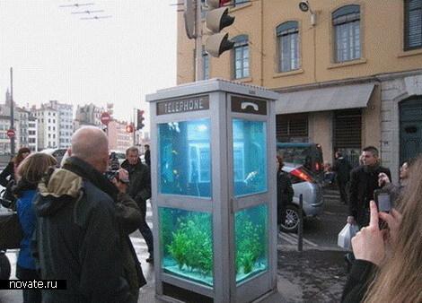 aquarium1 (470x338, 54Kb)