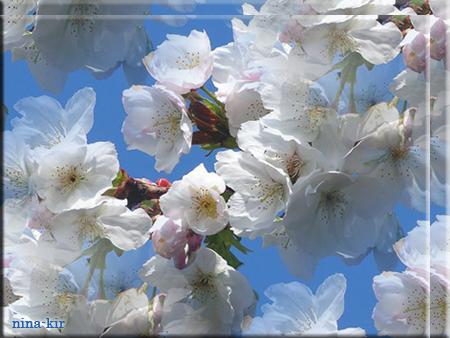 Весна-весна (450x338, 305Kb)