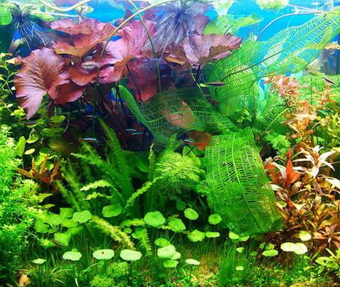 Аквариумные растения/5241642_aquaplants (480x405, 112Kb)