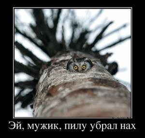 1516529_24642260_ejmuzhikpiluubralnah_thumbnail (300x285, 14Kb)