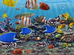 kakaja-temperatura-dolzhna-byt-v-akvariume-300x225 (300x225, 33Kb)