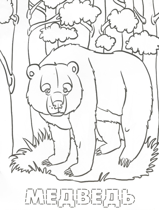 Раскраски с лесными зверями