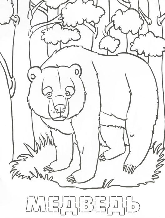 Раскраски диких животных наших лесов распечатать
