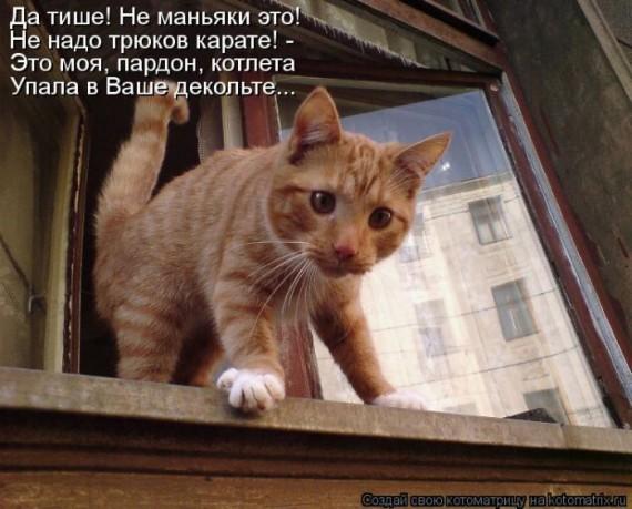 1364243846_kot_9 (570x459, 71Kb)