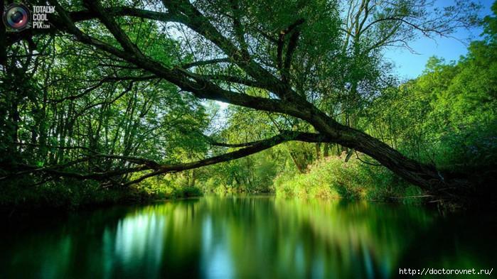 яркие краски мира зелёное озеро (700x393, 245Kb)