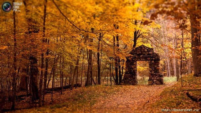 яркие краски мира осень (700x393, 273Kb)