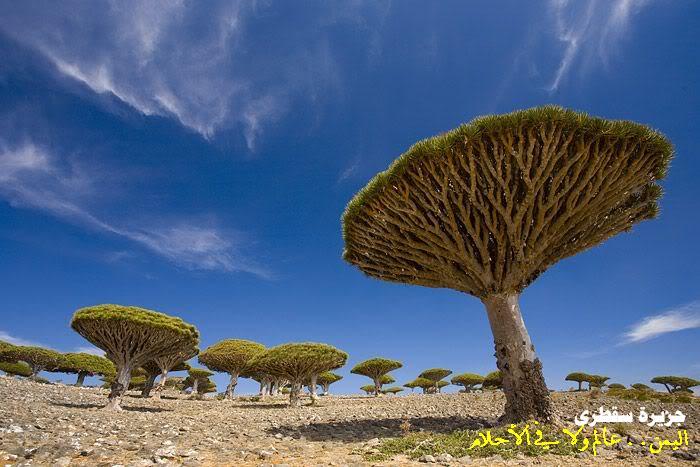 nabanews yemen (64) (700x467, 60Kb)