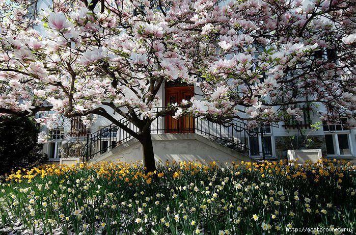 яркие краски мира весной (700x461, 377Kb)