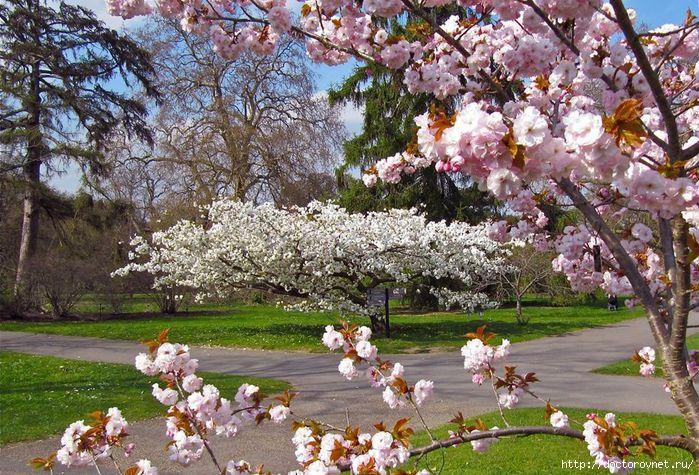 яркие краски мира май (700x475, 307Kb)