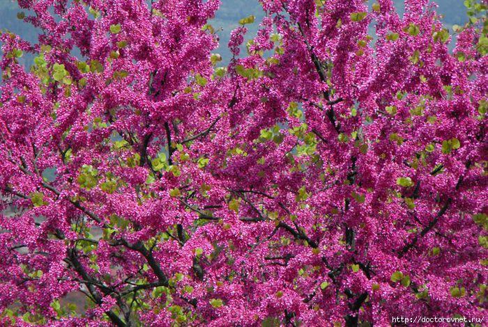 яркие краски мира яркое цветение (700x470, 347Kb)