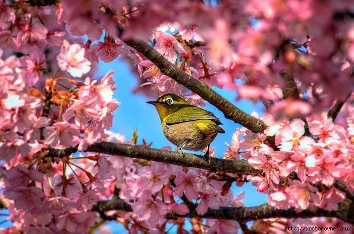 яркие краски мира птичка невеличка (700x463, 202Kb)