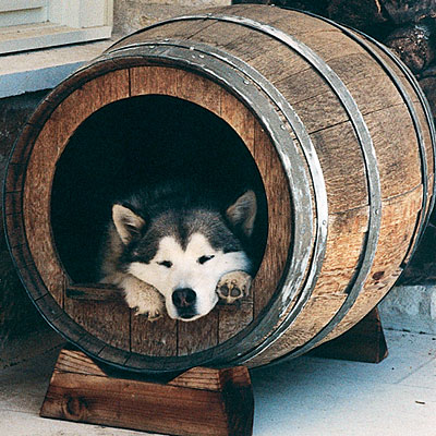 unique dog house (400x400, 64Kb)