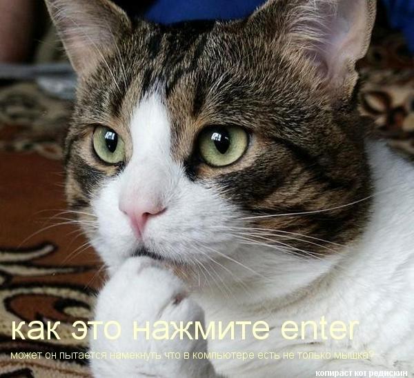 cat (600x548, 167Kb)