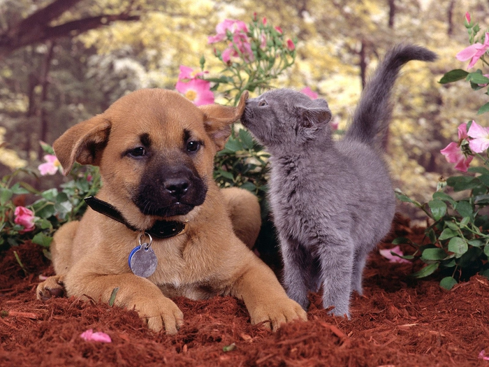 Apple-Cats-and-Dogs-Can-Live-Together (700x525, 322Kb)