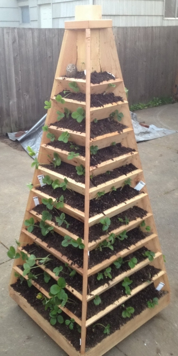 Vertical-Garden-Pyramid-Tower_02 (350x700, 187Kb)