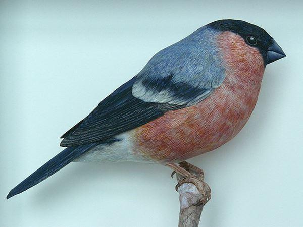 bird4 (600x450, 34Kb)