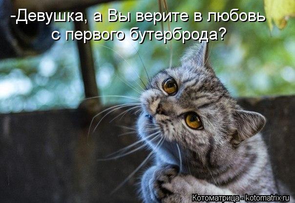 kotomatritsa_Ng (604x415, 48Kb)
