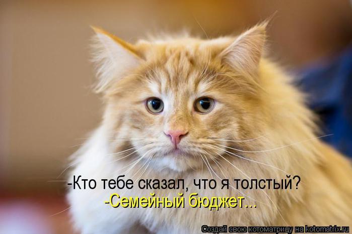 kotomatritsa_0c (700x466, 39Kb)