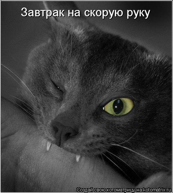 kotomatritsa_H3 (575x640, 68Kb)
