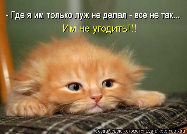kotomatritsa_LD (650x466, 39Kb)