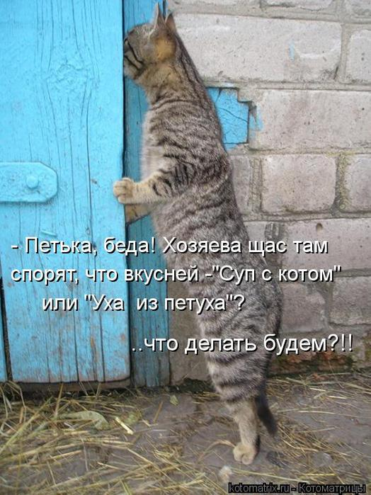kotomatritsa_pY (524x700, 77Kb)