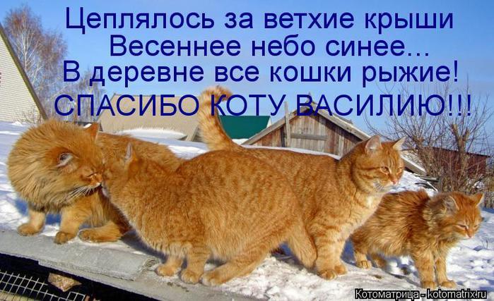 kotomatritsa_Y5 (700x427, 69Kb)