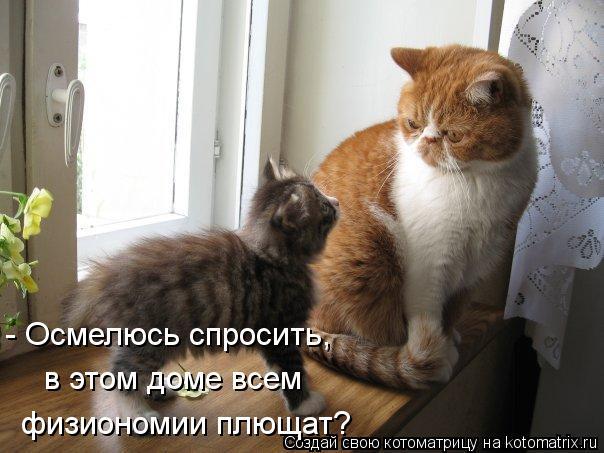 kotomatritsa_z8 (604x453, 49Kb)