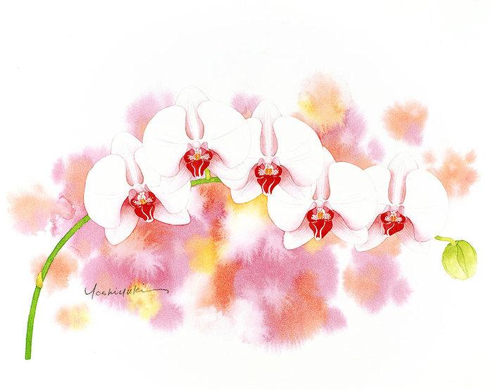 цветочные акварели Ибараги Йосиюки (700x553, 68Kb)