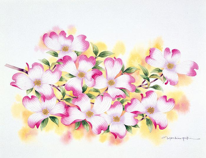 цветочные акварели Ибараги Йосиюки 1 (700x534, 105Kb)