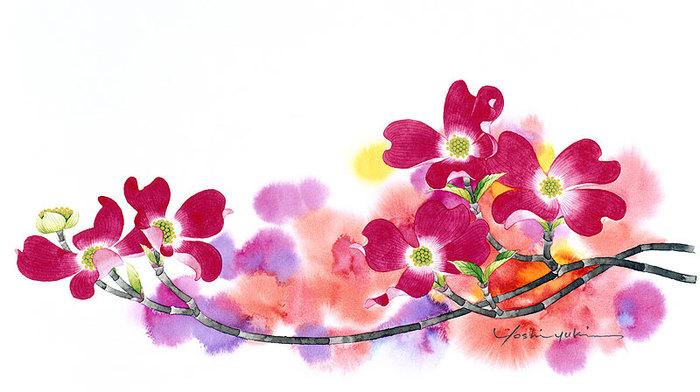 цветочные акварели Ибараги Йосиюки 2 (700x392, 69Kb)