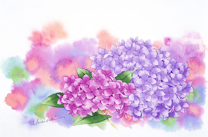 цветочные акварели Ибараги Йосиюки 6 (700x461, 101Kb)