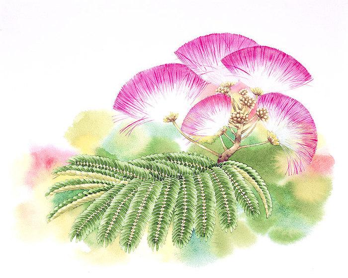 цветочные акварели Ибараги Йосиюки 9 (700x560, 127Kb)
