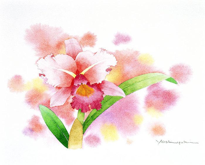 цветочные акварели Ибараги Йосиюки 10 (700x562, 90Kb)