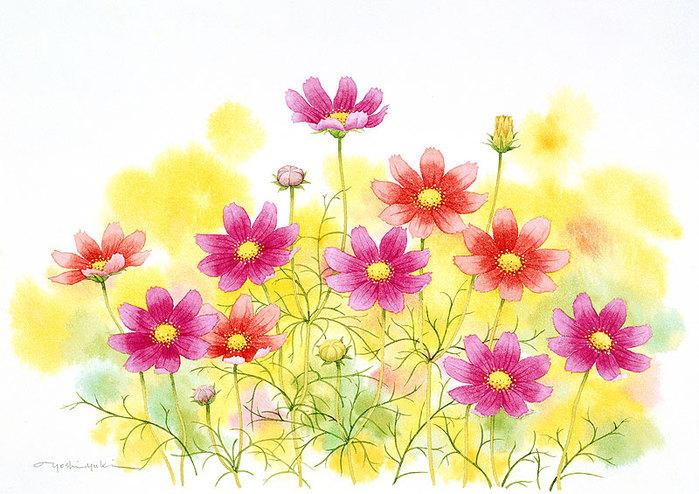 цветочные акварели Ибараги Йосиюки 12 (700x494, 119Kb)