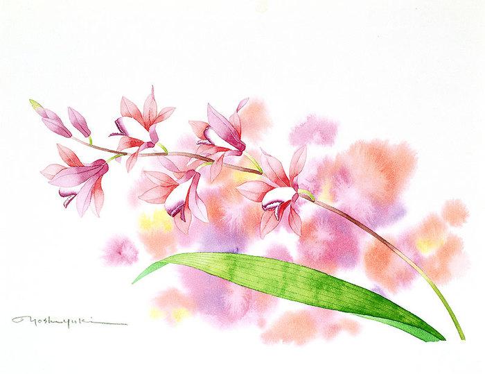 цветочные акварели Ибараги Йосиюки 13 (700x539, 71Kb)