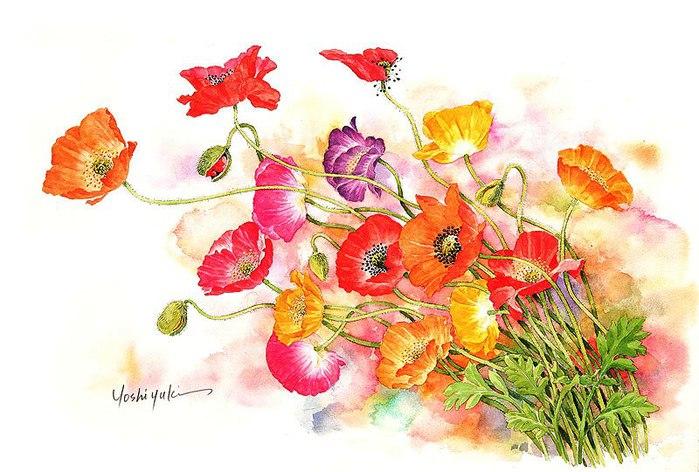 цветочные акварели Ибараги Йосиюки 16 (699x472, 89Kb)