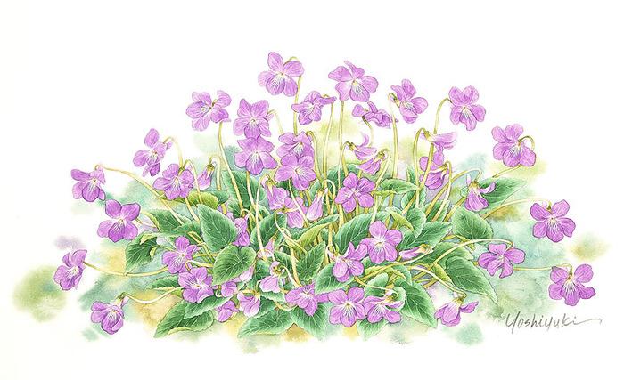 цветочные акварели Ибараги Йосиюки 17 (700x427, 121Kb)