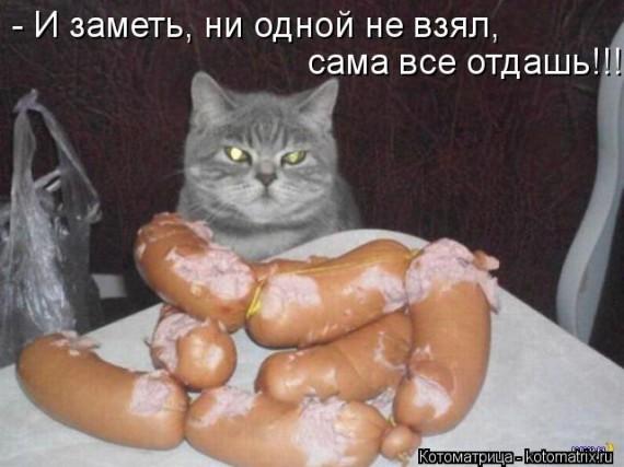 1366975345_kotomatritsa_to (570x427, 57Kb)