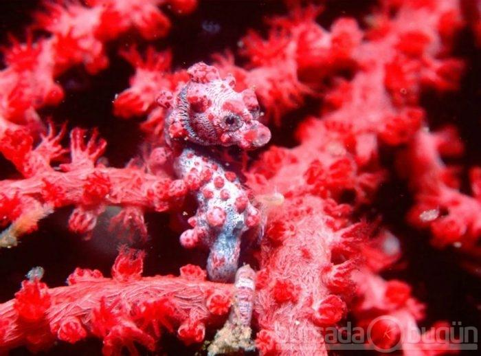 морской конек фото 6 (700x518, 206Kb)
