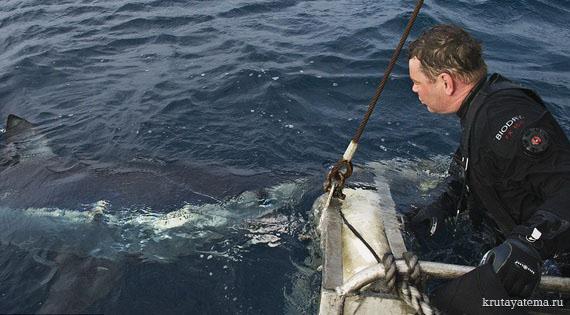 фотографии акул 1 (570x315, 70Kb)