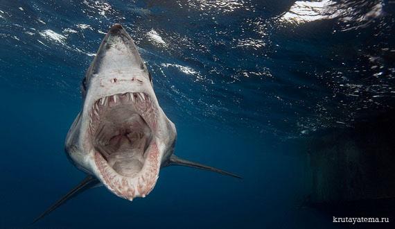 фотографии акул 3 (570x330, 59Kb)