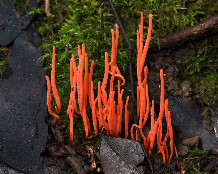 необычные грибы фото 7 (700x560, 136Kb)