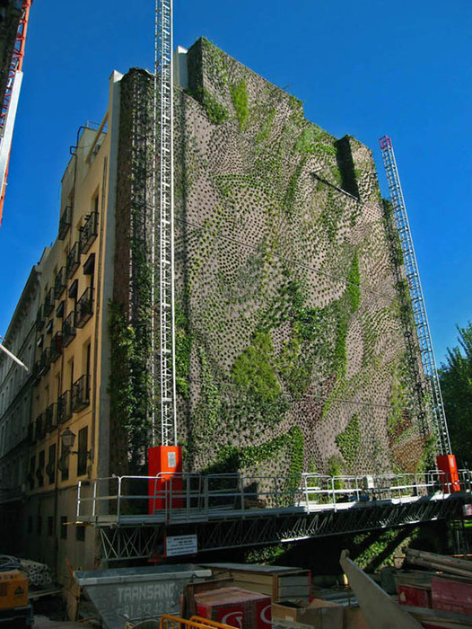Необычные вертикальные сады Патрика Блана