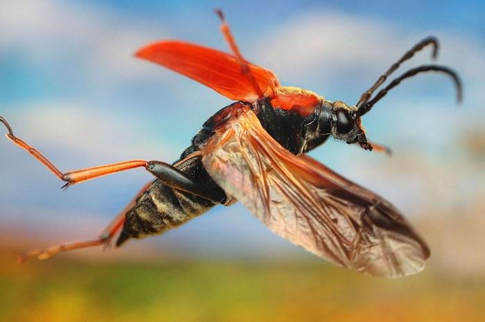 макро фото насекомых 3 (700x465, 52Kb)