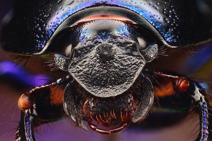 макро фото насекомых 5 (700x466, 117Kb)