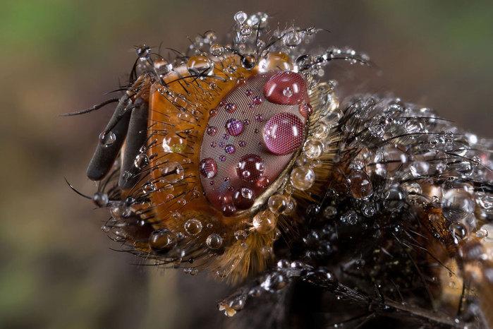 макро фото насекомых 7 (700x466, 93Kb)
