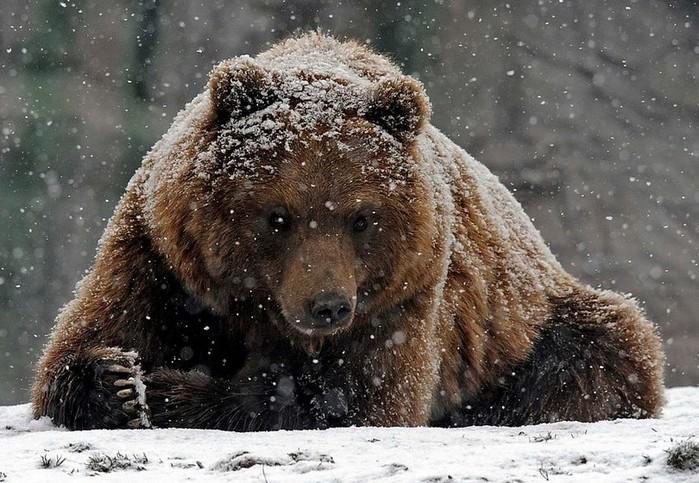 медвежья желчь от паразитов отзывы как пить
