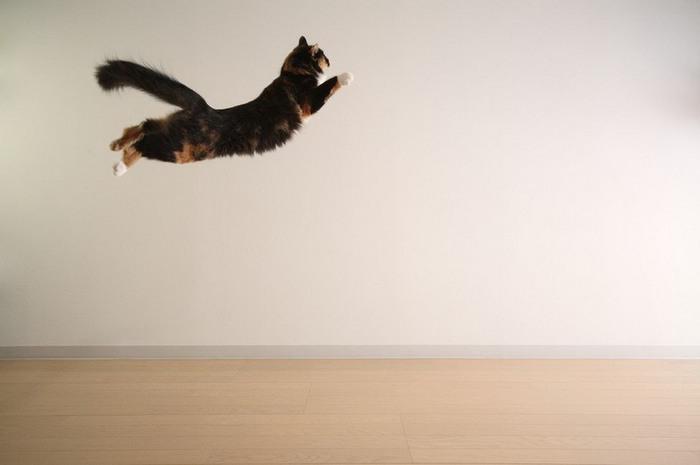 Летающая кошка (700x465, 32Kb)