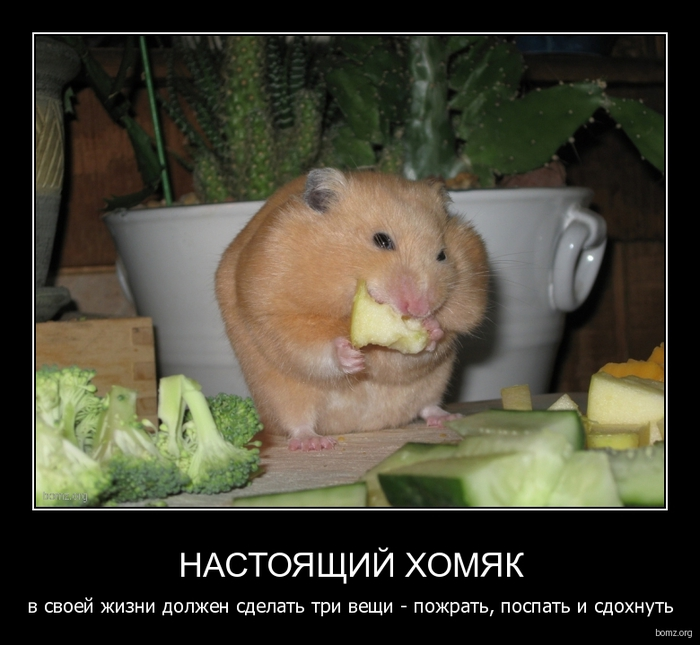 935109-2010.11.27-01.08.02-bomz.org-demotivator_nastoyashiyi_homyak__v_svoeyi_jizni_doljen_sdelat__tri_veshi_pojrat_pospat_i_sdohnut... (700x645, 221Kb)