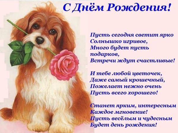 Татьяну с Днем рождения! 100359370_s_sobakoy
